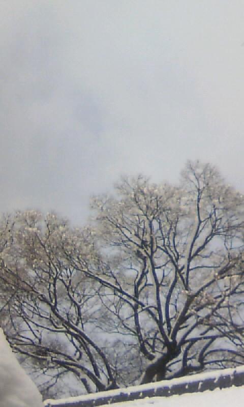 110117_101230雪の榎木