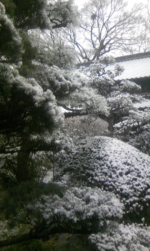 110211_090032庭の雪