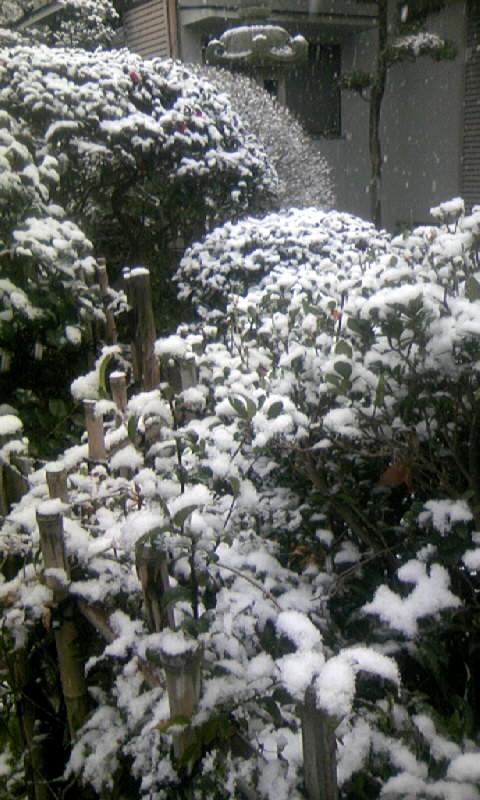 110211_090122庭の雪