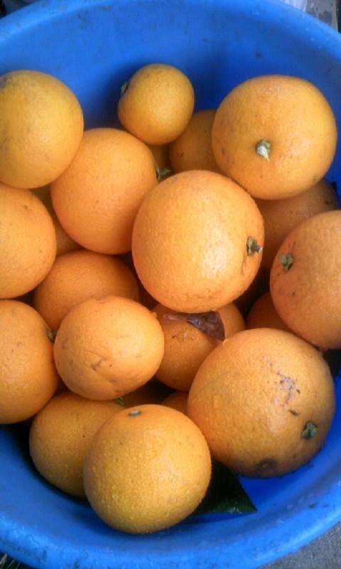 110211_092912柑橘