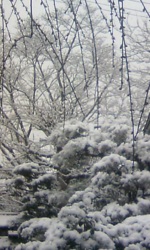 110211_100500庭の雪