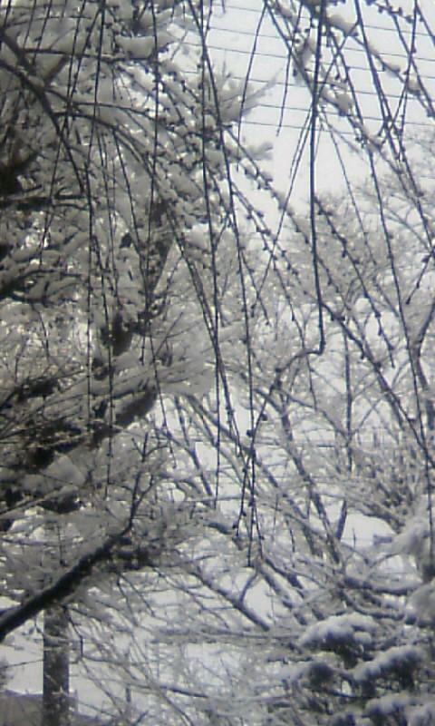 110211_100519庭の雪