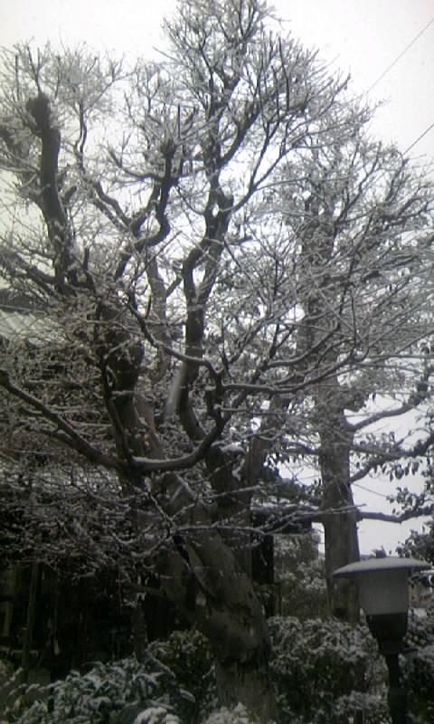 110211_090058庭の雪