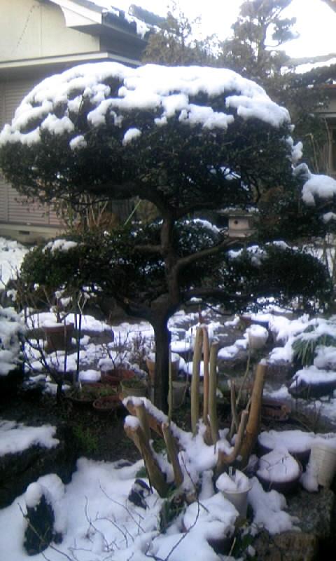 110215_065745今朝の庭の雪
