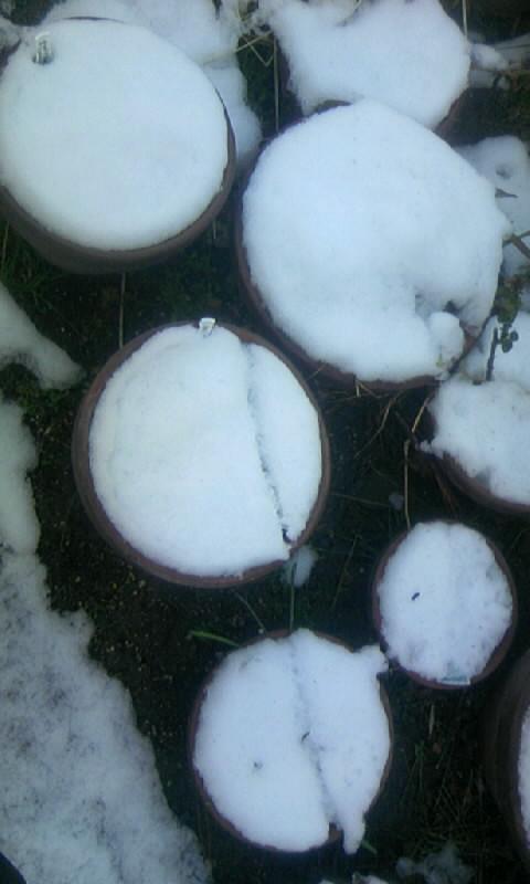 110215_081030雪