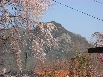 sakurasaku2.jpg