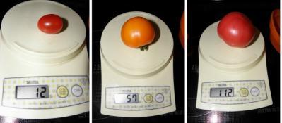 tomato-scale.jpg