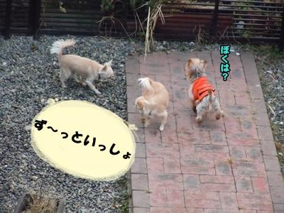 23-2-6あんきな062