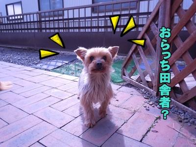 23-3-24あんきな040