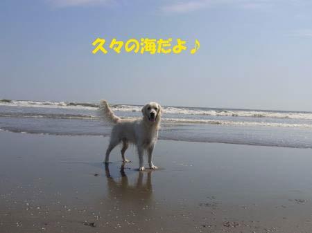 sea-0.jpg