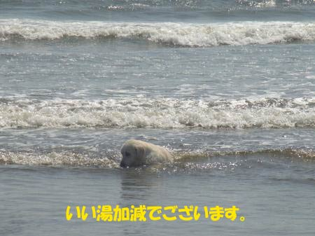 sea-6-1.jpg