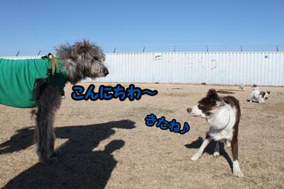 IMG_2681_1.jpg