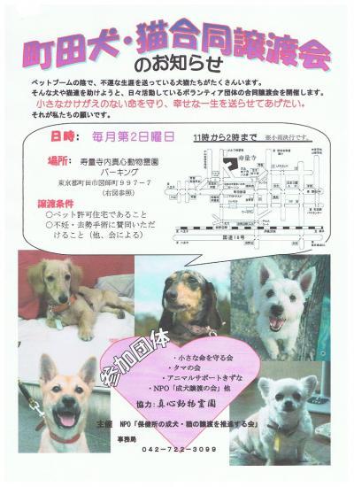 町田犬猫譲渡会