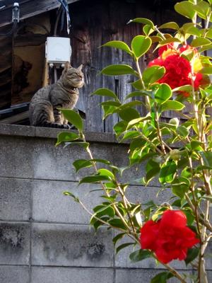 猫と黒獅子_サイズ変更