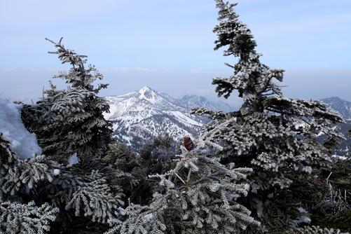 霧氷の針葉樹と笠ヶ岳