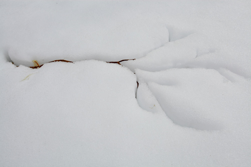 雪面に落ちた白樺の枝