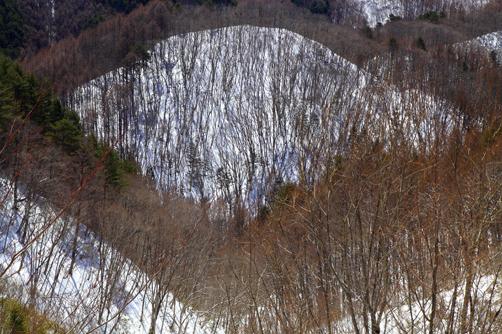 落葉裸木の山肌