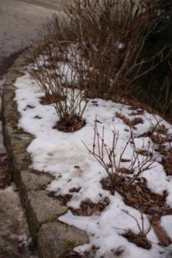 道路わきの雪