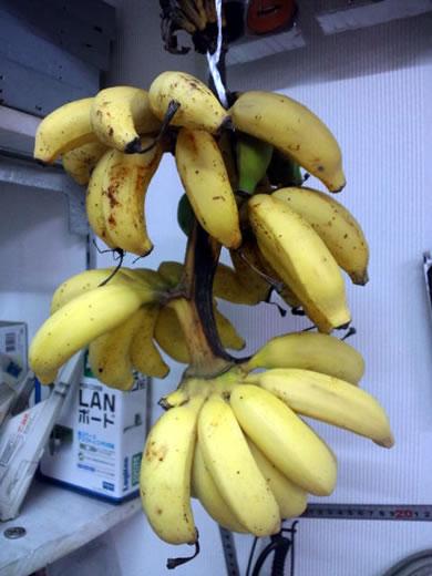 banana-091124.jpg