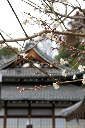 岡崎神社の隣の梅