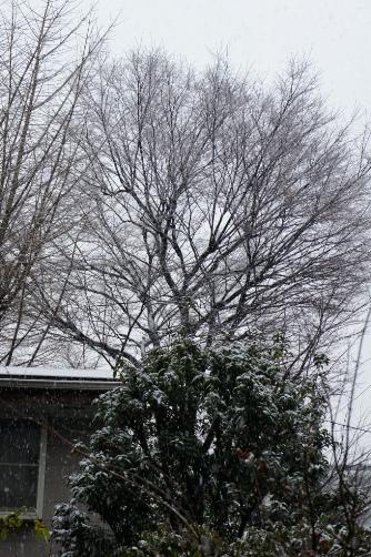 ふたたび東京雪景色
