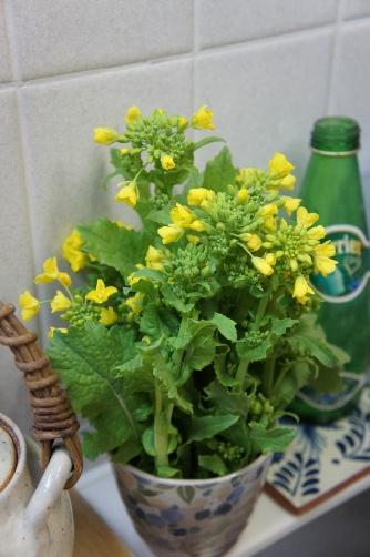 キッチン菜の花
