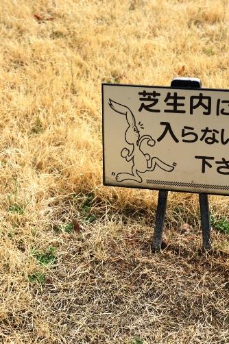 2011芝生うめぴょん