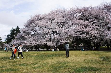 2011砧公園花見②