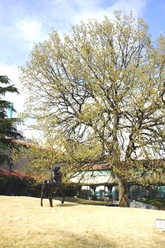 2011クヌギの木と彫刻