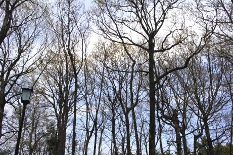 徳富蘆花の雑木林