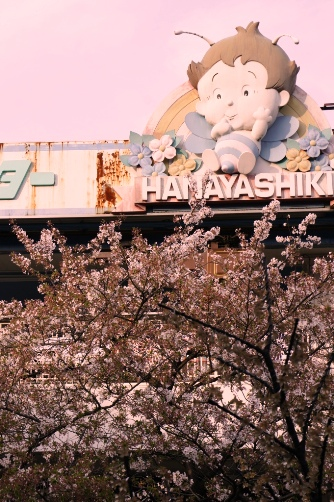 花屋敷の桜