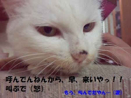 2013030801260003.jpg