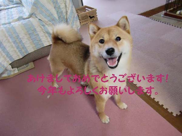 sakura2sai.jpg