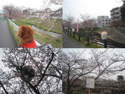 20100328-2.jpg