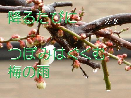 umenoame011.jpg