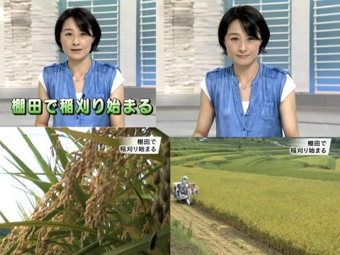 杉浦 圭子 棚田で稲刈り始まる