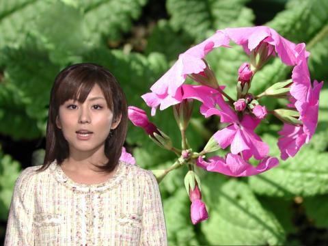 うがナツッ 桜草
