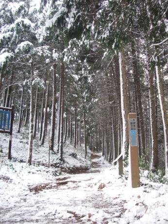 奥武蔵トレイル雪