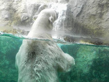 旭山動物園12