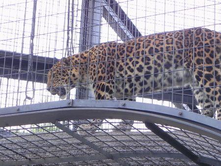 旭山動物園10