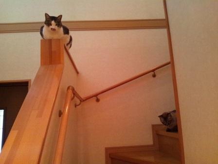 ヒロ階段手すり・旬