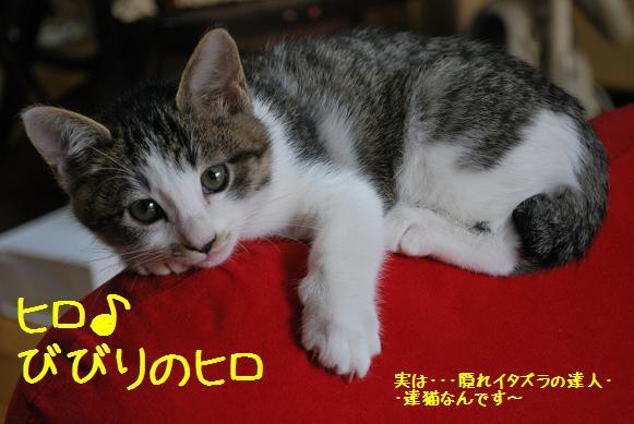 hiro_20091121224528.jpg