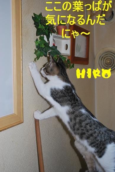 hiro_20091126235642.jpg