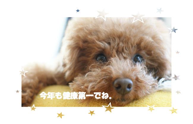 DSC06555-aisatu.jpg