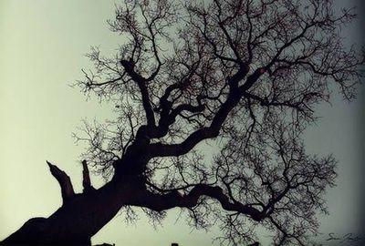 木の枝:網細血管みたい