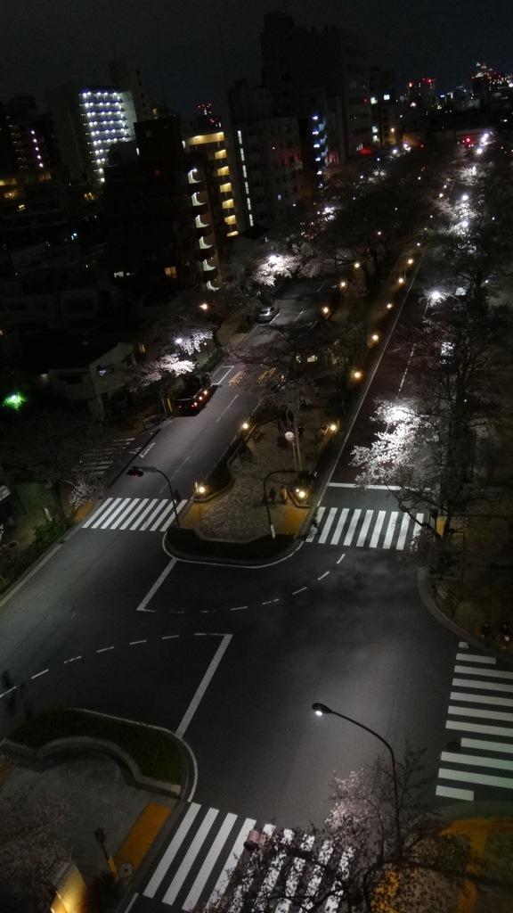 播磨坂桜並木3