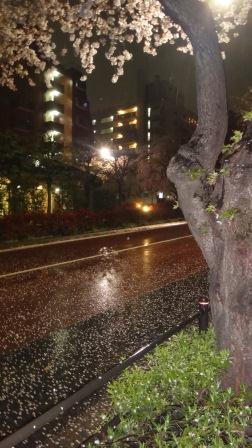 散る桜1」