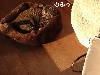 IMG_0555 - コピー