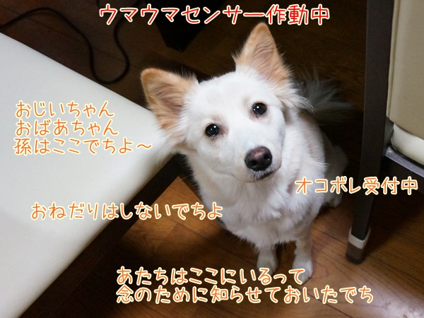 20130930_6.jpg