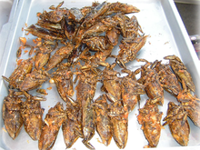 220px-Giant_water_bugs_on_plate.png